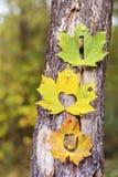 Je t'aime écrit sur une feuille d'automne Image stock