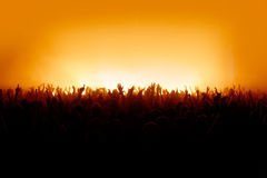 Je veux voir vos mains - foule de concert Images libres de droits