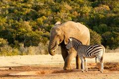 Je vous ai dit qu'il n'y a aucun éléphant de l'eau Photos stock