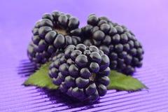 Jeżynowa owoc na purpury folii Fotografia Royalty Free