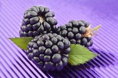 Jeżynowa owoc na purpury folii Zdjęcie Royalty Free