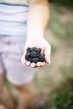 Jeżynowe jagody w ogródzie Zdjęcia Stock