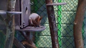 je ziarna squirrel słonecznika zdjęcie wideo