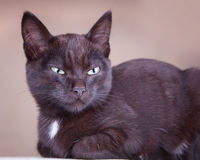 Jealous black cat looking far beyond Stock Photo