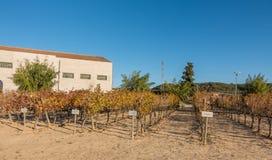 Jean Leon wineries grapeyard collection varieties Stock Photo