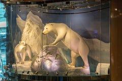 Jean Philippe Patisserie-Teamschokoladenanzeige von den Eisbären völlig gemacht aus Schokolade in Aria Resort u. Kasino in Las he stockfotografie