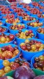 Tomatoes! stock photos