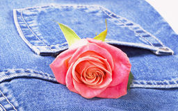 Jeans And Rose Royalty Free Stock Image