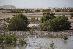 Jebel Ali Wildlife Sanctuary. Mangroves at Jebel Ali Wildlife Sactuary Royalty Free Stock Photo