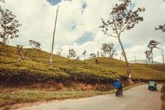 Jechać na rowerze jeżdżenia past herbaciane plantacje przy wiejskim krajobrazem Obraz Stock
