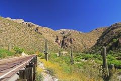 Jechać w górę góry Lemmon w Tucson Arizona Obraz Stock