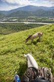 Jechać konia na wiejskiej drodze Widok od konia Fotografia Stock