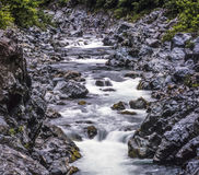 Jedediah Smith Redwoods stanu park Zdjęcie Royalty Free