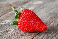 Jeden świeża duża czerwona truskawka Zdjęcia Royalty Free
