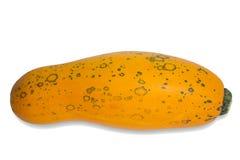 Jeden żółty jarzynowy szpik kostny Obrazy Stock