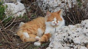 Jeden Bezdomny kota sposób życia obraz royalty free