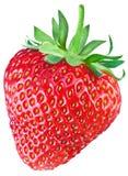 Jeden bogata truskawkowa owoc Fotografia Royalty Free