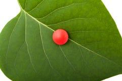 Jeden czerwona pigułka na zielonym liściu Obrazy Stock