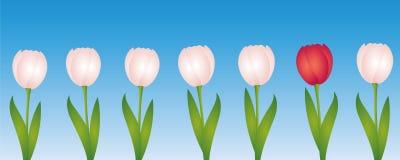 Jeden czerwony tulipan między wiele białymi tulipanami ilustracji