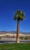 Jeden drzewko palmowe w pustynnej drodze zdjęcia stock