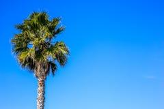 Jeden drzewko palmowe z negatyw przestrzenią fotografia stock