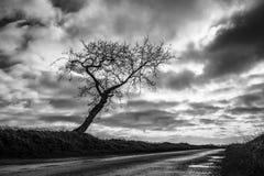 Jeden Drzewna droga Obrazy Stock