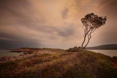 Jeden drzewna niebo woda Zdjęcie Royalty Free