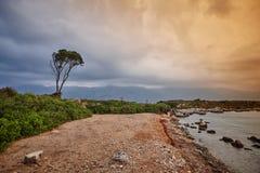 Jeden drzewna niebo woda Zdjęcia Stock