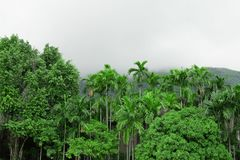Jeden Drzewny wzgórze park zdjęcia stock