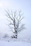 Jeden drzewo Fotografia Stock