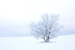 Jeden drzewo Zdjęcia Royalty Free