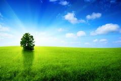 jeden drzewo Obraz Royalty Free