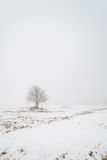Jeden drzewo na mgłowym zimy polu. Fotografia Royalty Free