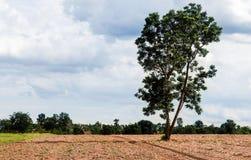 Jeden drzewo na polu Fotografia Royalty Free