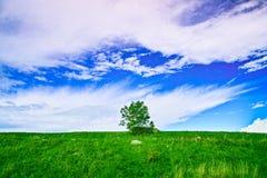 Jeden drzewo w niebieskim niebie obrazy stock