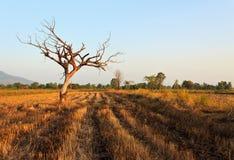 Jeden drzewo w polu Obrazy Stock