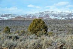 Jeden Duży Pustynny Bush Zdjęcia Stock