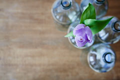 Jeden fiołkowy tulipan w wiązce pustych butelek kreatywnie use ostrość Obraz Royalty Free