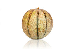 Jeden Galia melonu kantalup obrazy stock