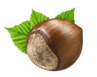 Jeden hazelnut odizolowywał zbliżenie w skorupie z liściem jako pakunku projekta elementy Świeży organicznie filbert na białym tl Obraz Royalty Free