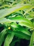 jeden insekt Obraz Stock