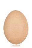 Jeden jajko Obrazy Royalty Free