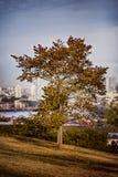 Jeden jesieni drzewo Zdjęcia Stock