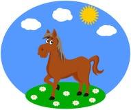 Jeden koń w łące Obraz Stock