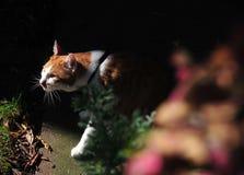 Jeden kot w gardon Fotografia Royalty Free