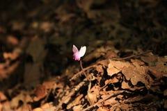 jeden kwiat Obraz Stock