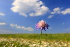 jeden kwiat Zdjęcia Stock