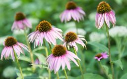 Jeden kwiat podkreślający z ciętością zdjęcia stock