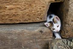Jeden młody śliczny kot Zdjęcia Stock
