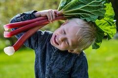 Jeden mała preschool chłopiec który żniwa jeden wielką wiązkę rabarbary w ogródzie na pogodnym wiosna dniu Zdjęcia Royalty Free